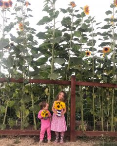 sunflowers homestead kids garden